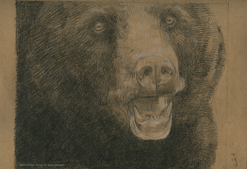 Black bear preparatory sketch
