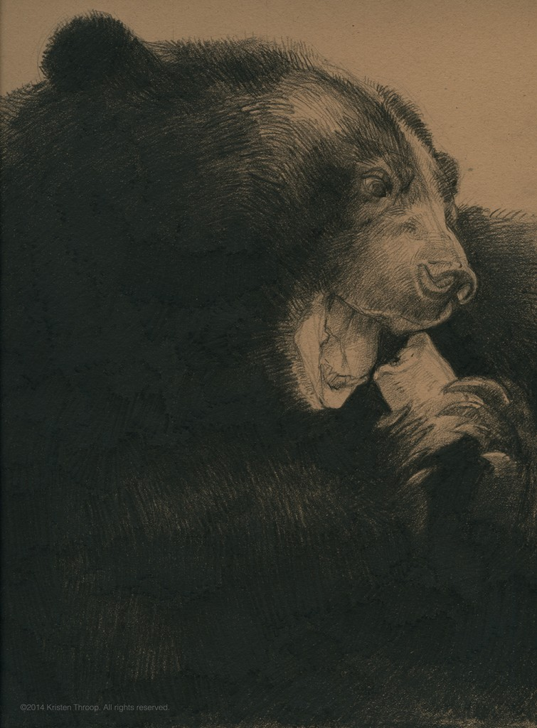 Sketch of black bear.