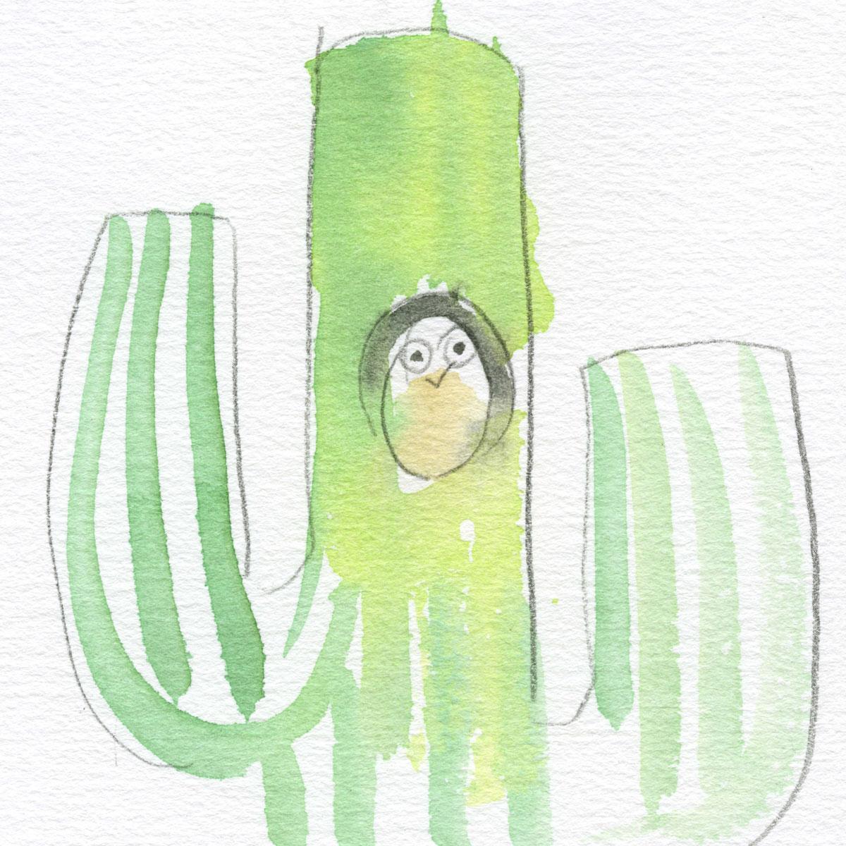Owl living in cactus